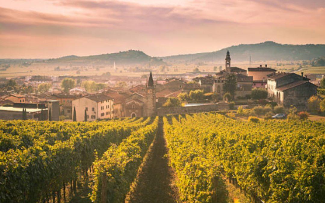 Historia del vino, origen, evolución y curiosidades